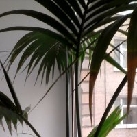 Комнатное растение :: Svetlana Lyaxovich