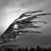 ветер :: геннадий щербак