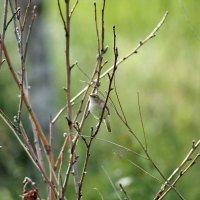 Птичка :: Екатерина Торганская