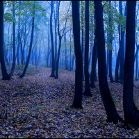 Сиреневый туман... :: Алексей Патлах