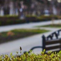 Городские зарисовки. Весна спешит в город. :: Алекандр Зиновьев