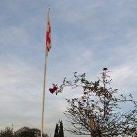 Розы и флаг :: Наталья (D.Nat@lia) Джикидзе (Берёзина)