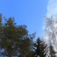 Опять весна на белом свете :: Татьяна Ломтева