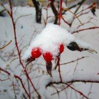 Вот и снежок в марте ! :: Татьяна ❧