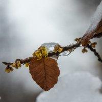 Еще чуть о зиме :: Александр Орлов