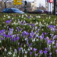 Городские цветы (11.03.2017) :: Valentina M.