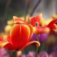весна :: Эльмира Суворова