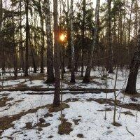 Мартовское солнце :: Андрей Лукьянов