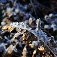 Первое дыхание зимы :: Борис Руненко