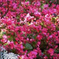 Цветочный ковёр :: Фотогруппа Весна.