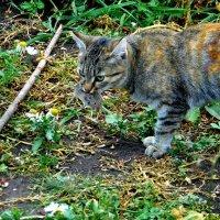 Кошка с мышкой. :: nadyasilyuk Вознюк