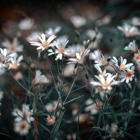 Лютики-цветочки :: Сергей Козлов