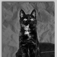 Кошка Катя. :: Михаил Цегалко
