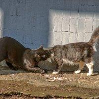 Жил да был чёрный кот за углом ... :: Анатолий. Chesnavik.