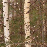 Приметы ранние весны :: Татьяна Ломтева