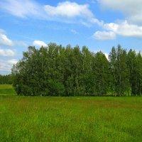 В июне. :: оля san-alondra
