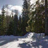 в лесу.... :: Ольга Cоломатина