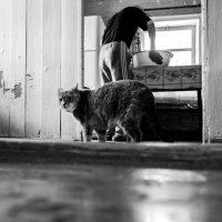 Сто характеров одной кошки. Муся :: Я Сурико