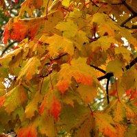 Осень :: Сергей Карачин