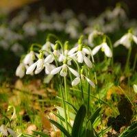Весна :: Анна Выскуб
