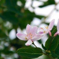 Уже скоро весна покорит наши сердца :: Ирина Божко