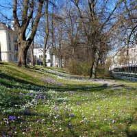 Весна  в городе... :: Galina Dzubina