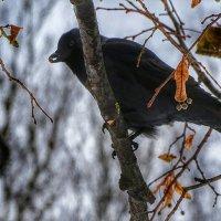 Птицы в городе :: Милешкин Владимир Алексеевич