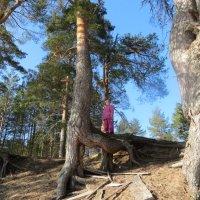 В сказочном лесу. :: ВАЛЕНТИНА ИВАНОВА