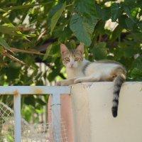 Отдыхающий котик. :: Оля Богданович