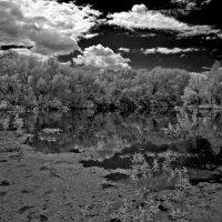 Лесное озеро... черный пруд... :: Павел Бутенко