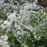 Весенний цветущий Сочи :: Антонина Владимировна