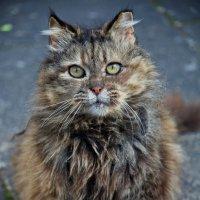 vit5 кот :: Vitaly Faiv