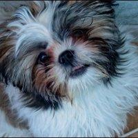Забавный щенок :: Светлана