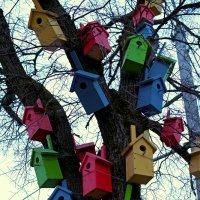 Гостеприимное дерево :: Ольга Осовская