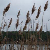 На осеннем ветру. :: Андрий Майковский