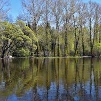 Весна в парке. :: Наталья