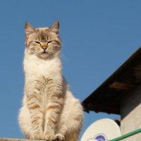 хозяйка крыши :: Александр Прокудин