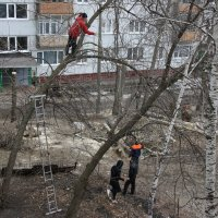Рубят тополя мужики... :: Валерия  Полещикова