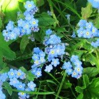 Эти цветы вызывают улыбку :: татьяна