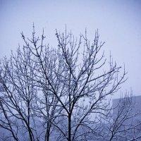 Весенний снег :: Елена Зудова