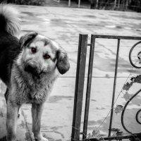 The Hellhound :: Роман Шершнев