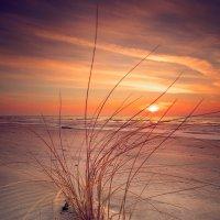 Dream in Colors :: Ruslan Bolgov