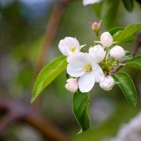 Весна :: Марина Киреева
