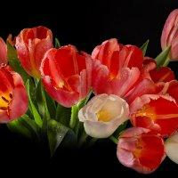 Красные тюльпаны :: Светлана Л.
