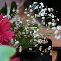 Прекрасны в любое время года :: Марина Щуцких