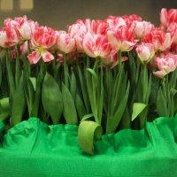 Тюльпаны :: Aнна Зарубина