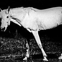 Лошадь :: Nn semonov_nn