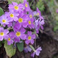Весна пришла :: İsmail Arda arda
