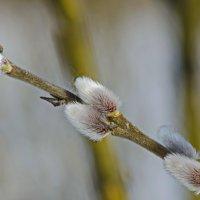 Дыхание весны :: Ильдус Хамидулин