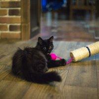 кот подруги с интересным именем Хлебс))) :: Света Доманова